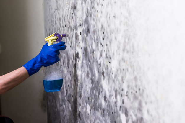 Mold Remediation in seattle washing